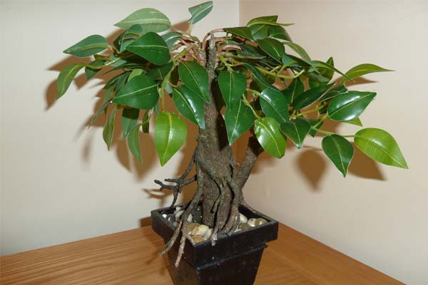 Mini Ficus artificial
